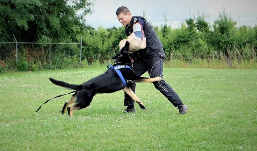 De jonge en ambitieuze pakwerker Jordy Kok uit Ravenswaay tijdens een clash met een aanstormende hond. (Foto: archief Jordy Kok)