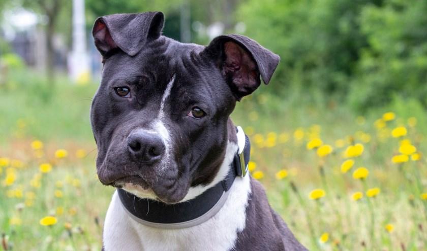 Twiggy is een vrolijke, enthousiaste en vriendelijke hond die graag veel wil ondernemen.