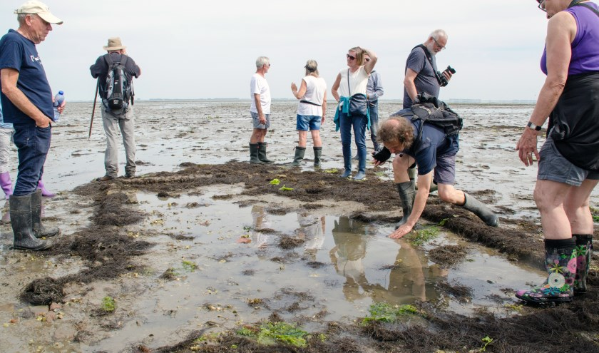 Hans Jongepier (bukkend) verzorgt de excursie naar het verdronken dorp Tolsende i.s.m. het Oosterscheldemuseum. Foto Carrie Frederiks.