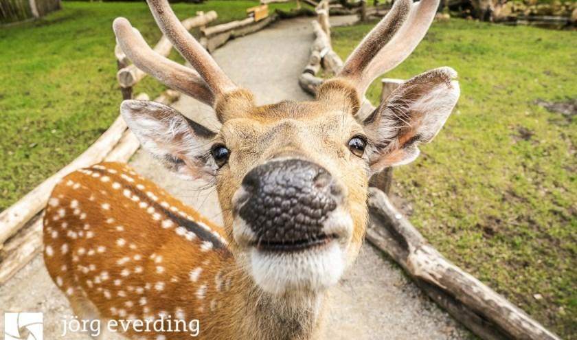 Close-up! De herten zijn behoorlijk fotogeniek. Hier gefotografeerd door bezoeker Jörg Everding.