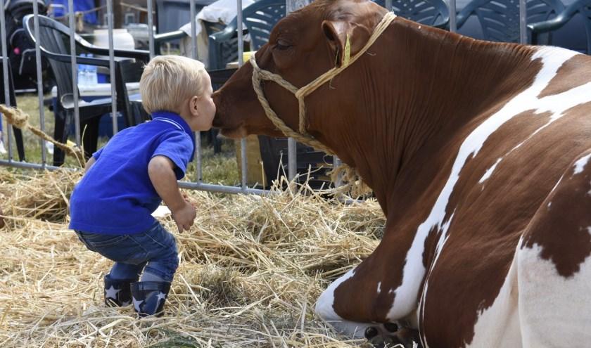 """""""De Fokveedag is altijd een mooie dag. Een dag waarop we vooral kinderen kunnen laten zien hoe het boerenleven er uit ziet."""""""