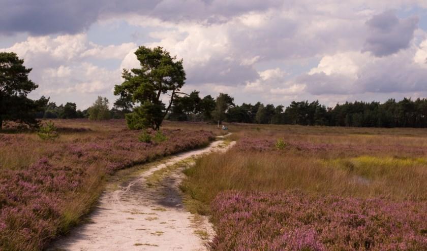 De paarse pracht. (Foto: Geldersch Landschap & Kasteelen)