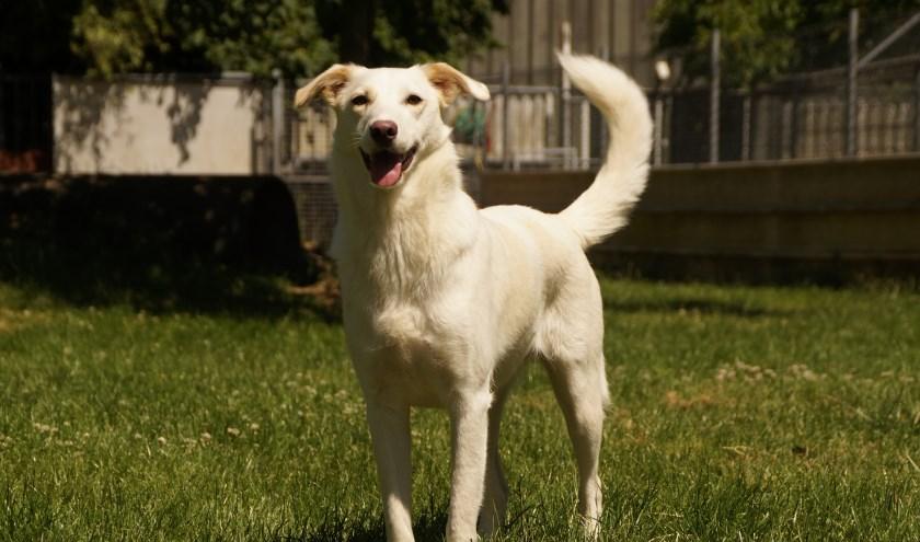 Elke week zet Dierenopvangtehuis De Bommelerwaard een dier in het zonnetje. Deze week is dat Bianca. Kijk voor meer informatie op www.dierenasiel-bommelerwaard.nl.