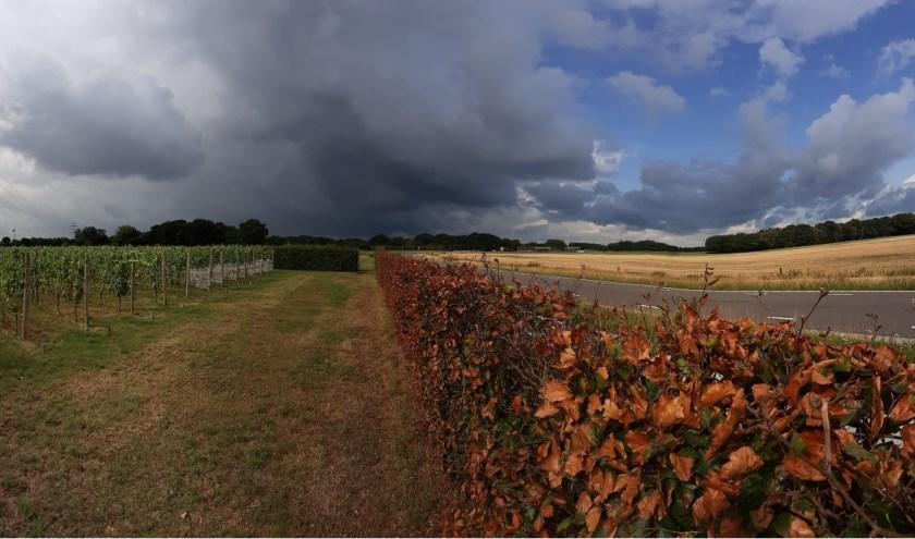 Kleurenpalet: jonge druiven/ dreigend onweer -versus- geoogst korenveld/ heldere lucht (locatie Wijngaard Telgt)