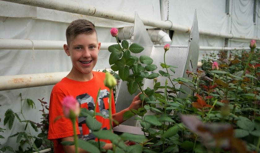 Julian mag op zijn eerste werkdag in de kwekerijk direct al rozen knippen. Foto: Robbert Roos