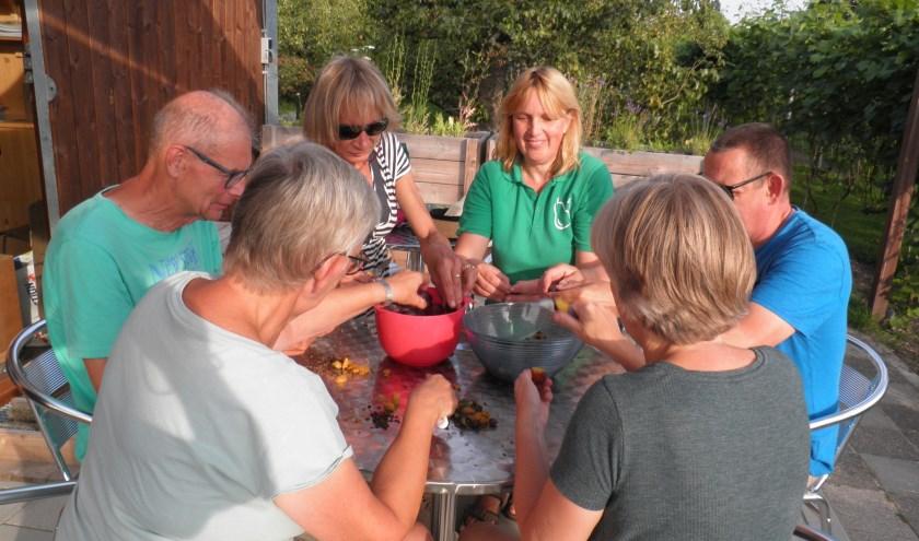 Wijktuin Zoete Aarde en Hof van Seghwaert zijn groene oases. Een werkgroepje is bezig met ontpitten van bessen en pruimen voor het maken van jam. Foto Kees van Rongen