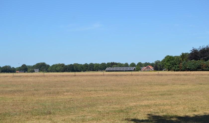 Geel en verdroogd gras door aanhoudende droogte. (Foto: Karin Stronks)