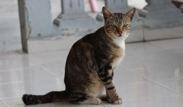 Inwoners laarbeek verdeeld over overlast kattenpoep for Kattenpoep in de tuin