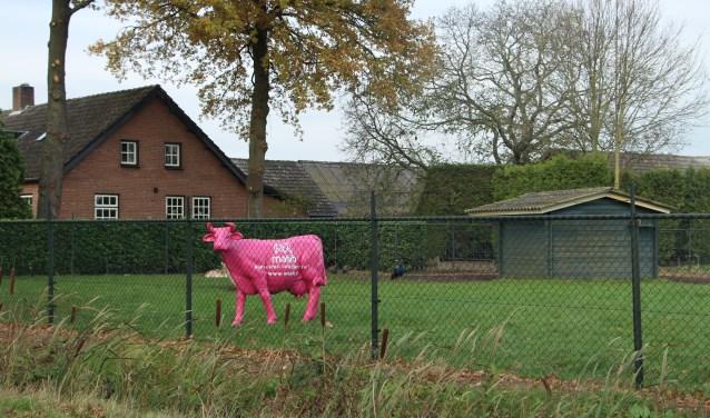 De campagne van Mabib is herkenbaar aan enkele roze koeien in het buitengebied van Laarbeek   | Fotonummer: 24e14a