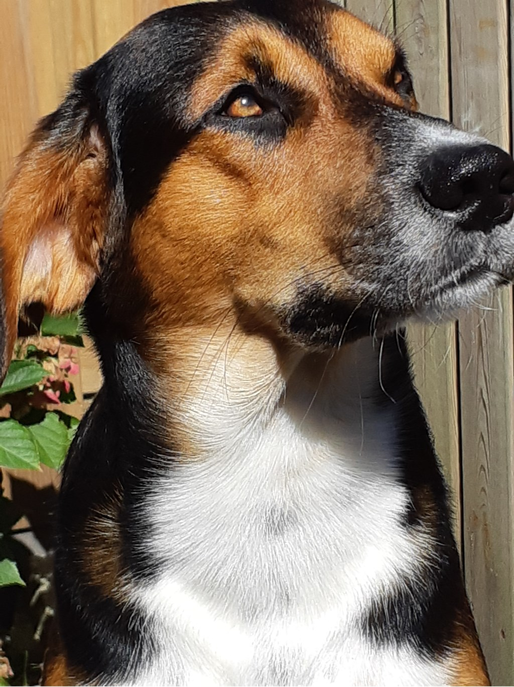 Onze lieve hond Charlie (Christel, Lara en Jens Kalff)  © deMooiLaarbeekkrant