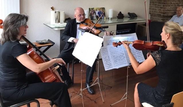 Het Gioia Kwartet   | Fotonummer: 9b9f04