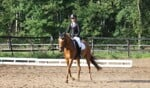 Pony Dressuur Bij Manege D'n Perdenbak