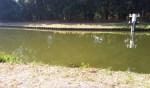 Blauwalgen in Lieshout en Aarle-Rixtel