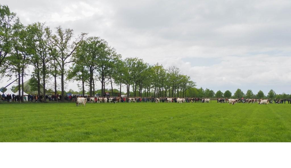 Foto: Johan Maas © deMooiLaarbeekkrant