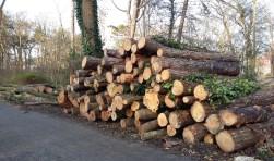 De gekapte bomen in het De Ridderpark worden versnipperd. De stronken kunnen niet blijven liggen vanwege de iepziekte.