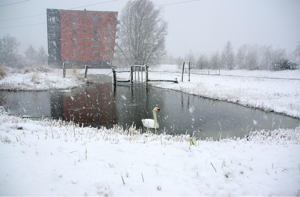 Winterse taferelen in het Vroege Vogelspark. | Foto Willemien Timmers  © uitgeverij Verhagen
