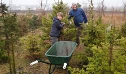 De kerstbomen kunnen weer worden opgehaald bij Vrij Groen. Dit jaar heeft zeventig procent van de bomen het overleefd. | Foto PR