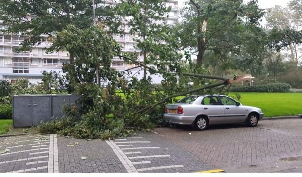 In de Treubstraat is een tak van een boom op een auto gevallen.