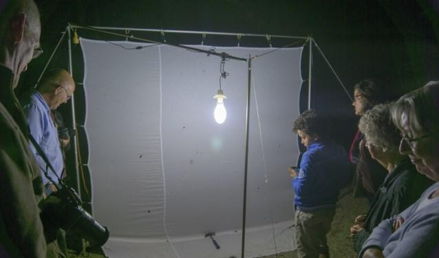 Nachtvlinders spotten in de Heemtuin. | Foto en tekst: Remco Out