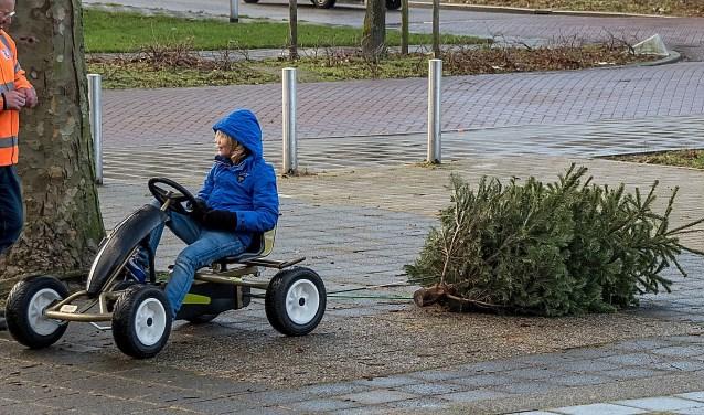 Prima manier om een kerstboom naar het inzamelpunt te brengen! | Archieffoto: J.P. Kranenburg