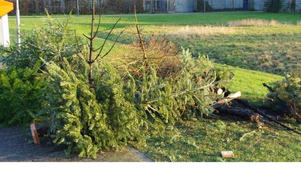 Oude kerstbomen kunnen ook dit jaar door kinderen bij de gemeente worden ingeleverd. | Archieffoto Willemien Timmers