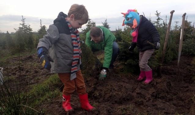 Boombrengers kunnen op woensdag- en zaterdagmiddag hun boom zelf planten in het kerstbomenasiel.
