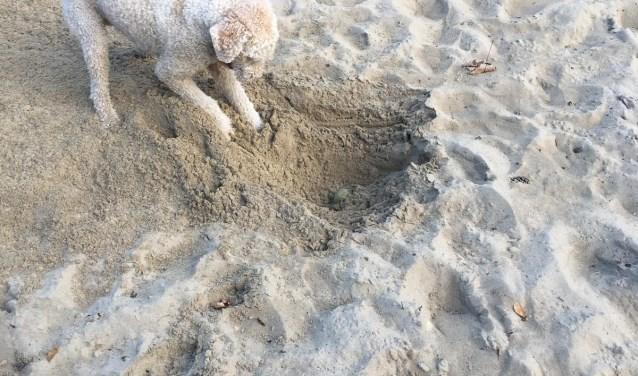 Het is een genoegen de hond zo bezig te zien. Driftig gravend, vol energie en enthousiasme.