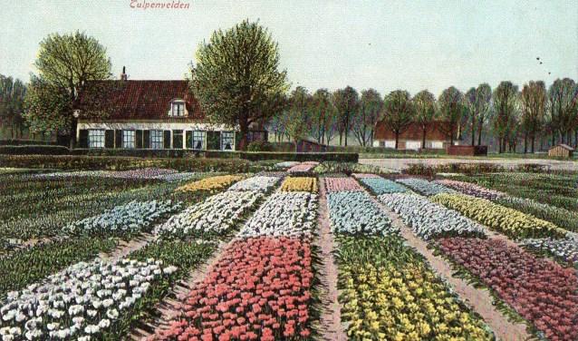 Voorbeeld van een historische prentbriefkaart uit de Bollenstreek.