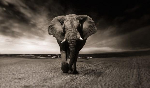 Geen echte olifanten in Lisse, wel een olifantenpaadje bij de Haven. Dat is een afstekertje, een niet-officieel fiets- of wandelpad dat onbedoeld door gebruikers van de reguliere fiets- en wandelpaden in de loop van de tijd wordt gecreëerd.