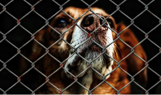 In de Lisser begroting is geen geld opgenomen voor dierenwelzijn.