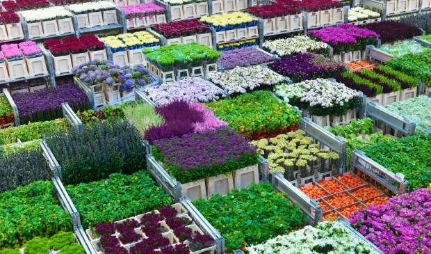 Recordexport bloemen en planten van € 6 miljard haalbaar