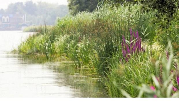 Voor het aanleggen van natuurvriendelijke oevers stelt het Hoogheemraadschap Rijnland subsidie beschikbaar.