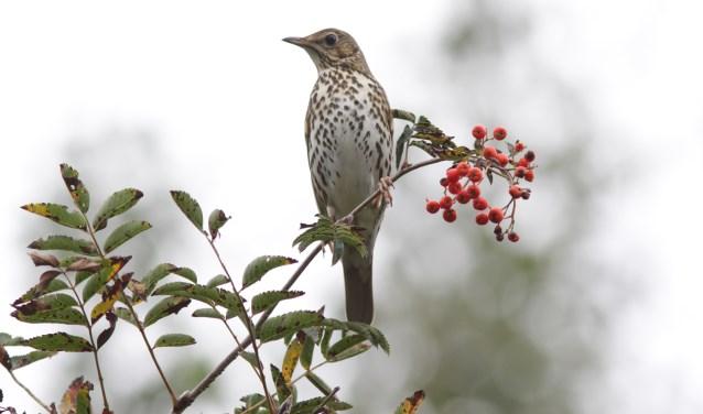 Leer vogels aan de zang herkennen in het Natuurcentrum. | Foto: Dineke Kistemaker