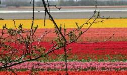 In de omgevingsvisie worden 6 deelgebieden genoemd, waaronder: een duurzame bloementuin.| Foto: pr