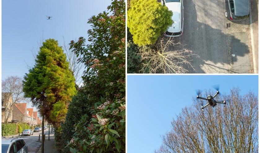 Bomen Op Erfgrens.Precario Op Overhangend Groen In Openbare Ruimte Oegstgeester Courant