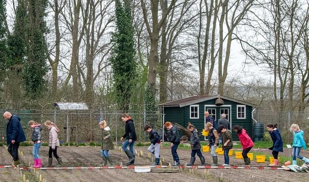 Wethouder Olaf McDaniel gaat de leerlingen van de Koningin Julianaschool voor bij het paadjes trappen. | Foto: J.P. Kranenburg
