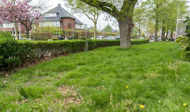 Het gras staat op de meeste plekken minstens 20 centimeter hoog.