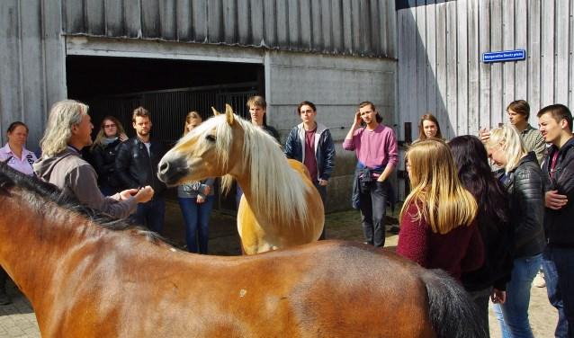 Dr. Slabbekoorn: 'Als wij rustig zijn, en in hun gezichtsveld blijven, worden paarden ook relaxed.' | Foto Willemien Timmers
