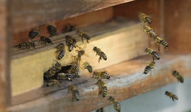 Bezige bijen bij de raat. | Foto: pr