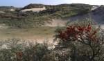 Struinen door de duinen van De Blink