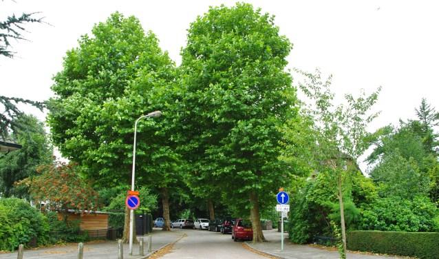 De gemeente gaat opnieuw kijken naar eventueel te kappen bomen in het Oranjepark en de Bloemenbuurt.   Archieffoto Willemien Timmers