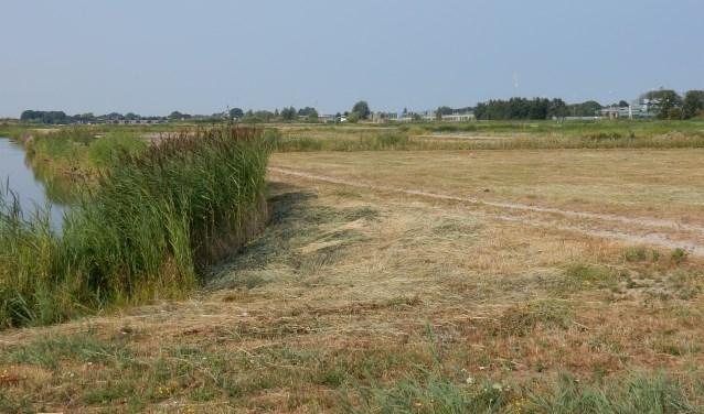Pas afgelopen week is het grasland grotendeels gemaaid, waarbij het riet ongemoeid is gelaten.