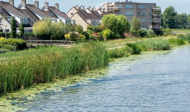 Het Hoogheemraadschap houdt het waterpeil momenteel vrij hoog. Op de foto de Dwarswatering ter hoogte van de Buitenhof.
