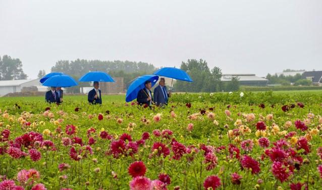 Bestuurders op weg naar de ondertekening, midden in het veld vol dahlia's. | Foto: Willem Krol