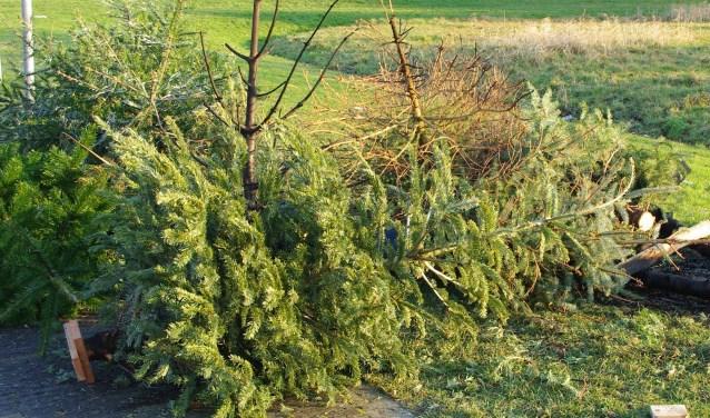 Kerstbomen moeten in principe worden weggebracht naar de gemeentewerf als ze niet op 3 januari zijn meegegeven.