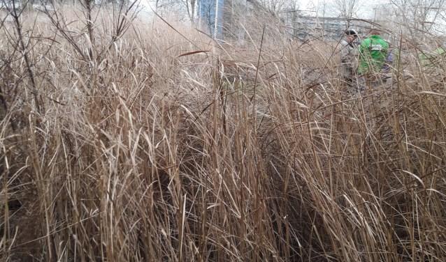 Het plantsoen ziet er armetierig uit | Foto: PR