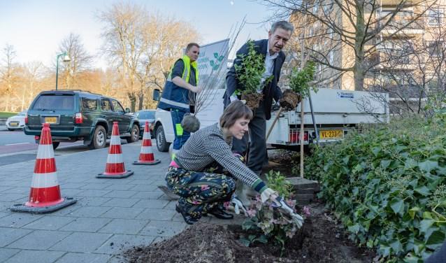 Wethouder Matthijs Huizing plant samen met Judith Boomsma-Batenburg planten op de plaats van tegels.