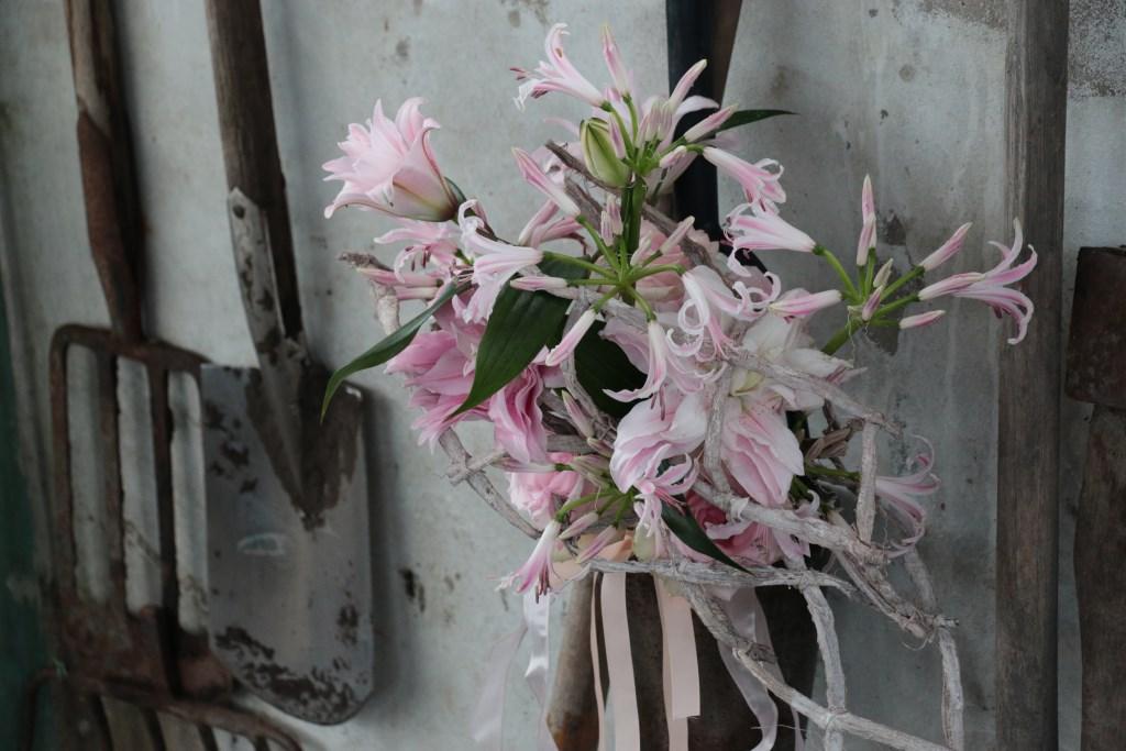 Prunus glandulosa Alba Plena enNerine bowdenii Berenice. Foto: Barendsen © Verhagen