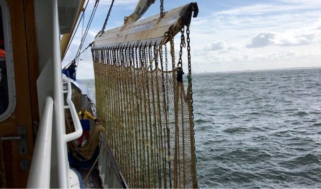 De visserijsector wordt dankzij het verbod op het pulstuig meer dan tien jaar terug in de tijd geworpen, vinden de visserijorganisaties.