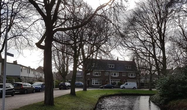 De kastanjes in de Wilhelminalaan en Prins Hendriklaan.   Foto: MV